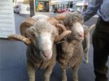 Animals 2U Attend Melbourne's Wool Week